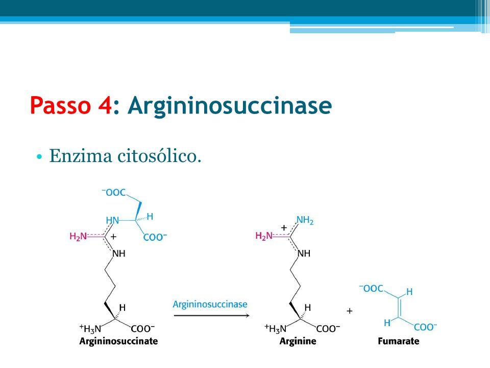 Passo 4: Argininosuccinase Enzima citosólico.