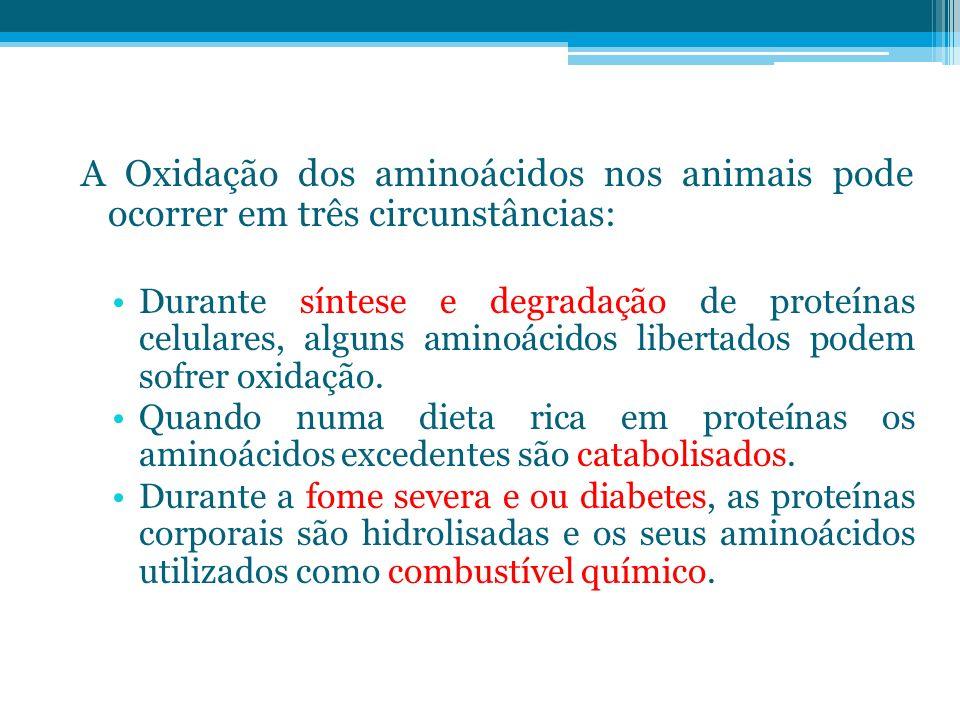 A Oxidação dos aminoácidos nos animais pode ocorrer em três circunstâncias: Durante síntese e degradação de proteínas celulares, alguns aminoácidos li