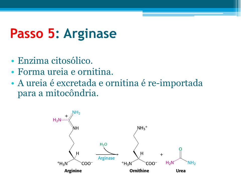 Passo 5: Arginase Enzima citosólico. Forma ureia e ornitina. A ureia é excretada e ornitina é re-importada para a mitocôndria.