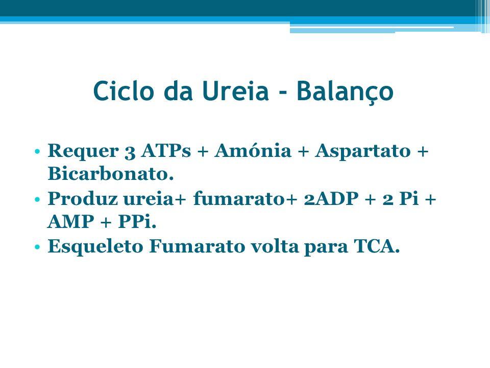 Ciclo da Ureia - Balanço Requer 3 ATPs + Amónia + Aspartato + Bicarbonato. Produz ureia+ fumarato+ 2ADP + 2 Pi + AMP + PPi. Esqueleto Fumarato volta p