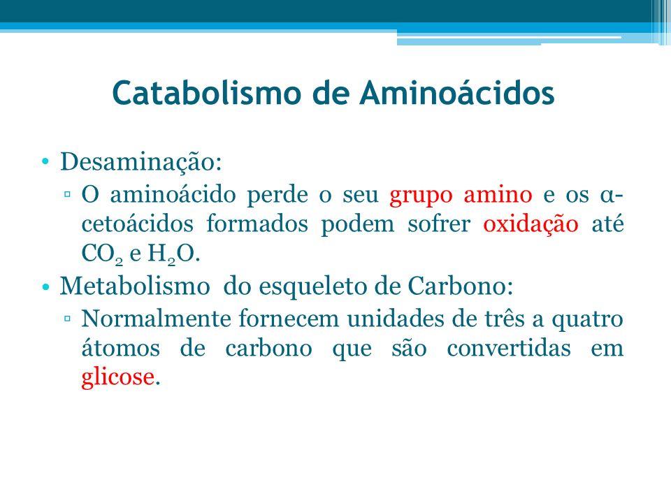Catabolismo de Aminoácidos Desaminação: O aminoácido perde o seu grupo amino e os α- cetoácidos formados podem sofrer oxidação até CO 2 e H 2 O. Metab