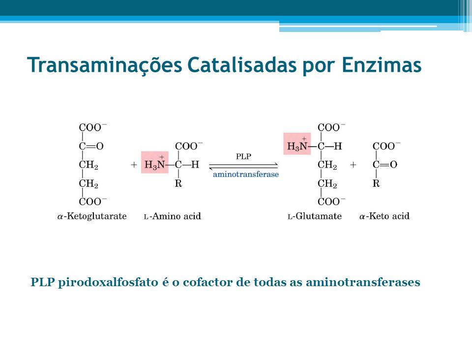 Transaminações Catalisadas por Enzimas PLP pirodoxalfosfato é o cofactor de todas as aminotransferases