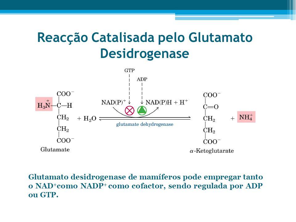 Reacção Catalisada pelo Glutamato Desidrogenase Glutamato desidrogenase de mamíferos pode empregar tanto o NAD + como NADP + como cofactor, sendo regu