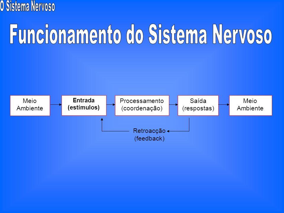 Órgãos sensoriaisGlândulas endócrinasSistema nervoso Hereditariedade