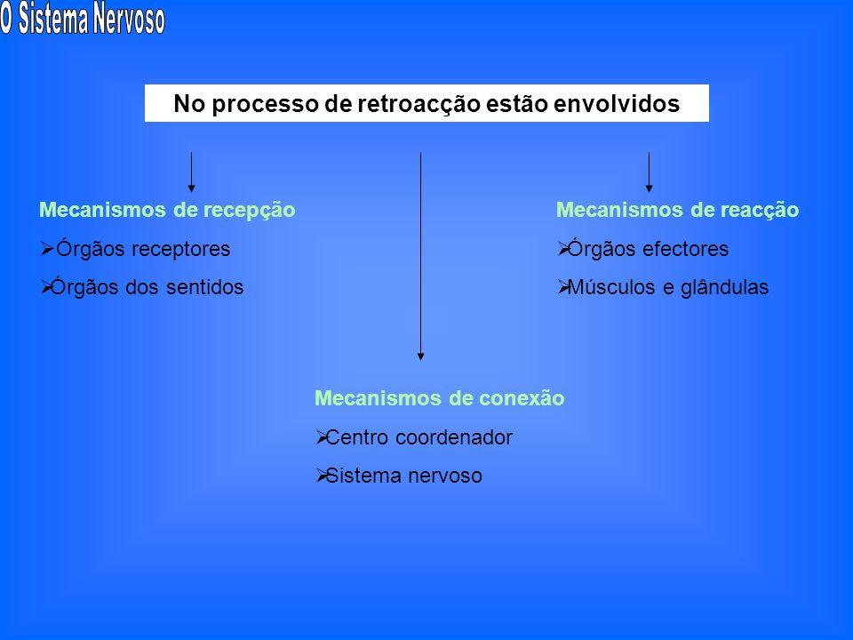 Meio Ambiente Saída (respostas) Entrada (estímulos) Processamento (coordenação) Retroacção (feedback) Meio Ambiente