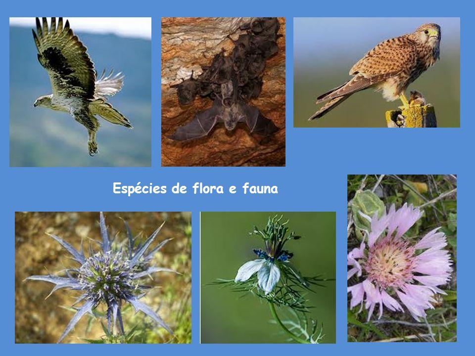 Espécies de flora e fauna
