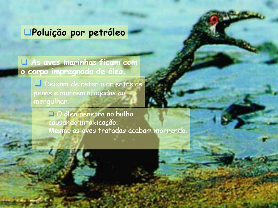 As aves marinhas ficam com o corpo impregnado de óleo. O óleo penetra no bulho causando intoxicação. Mesmo as aves tratadas acabam morrendo. Deixam de