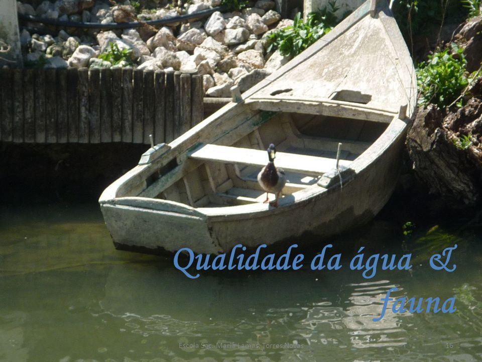 Qualidade da água & fauna 16Escola Sec. Maria Lamas, Torres Novas