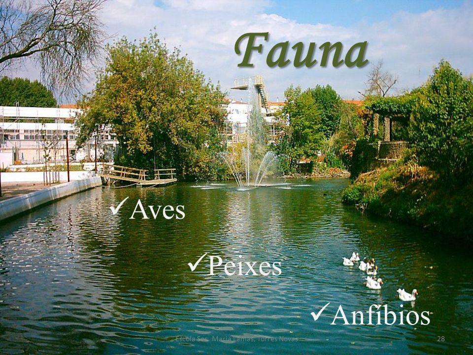 Fauna Aves Peixes Anfíbios 28Escola Sec. Maria Lamas, Torres Novas
