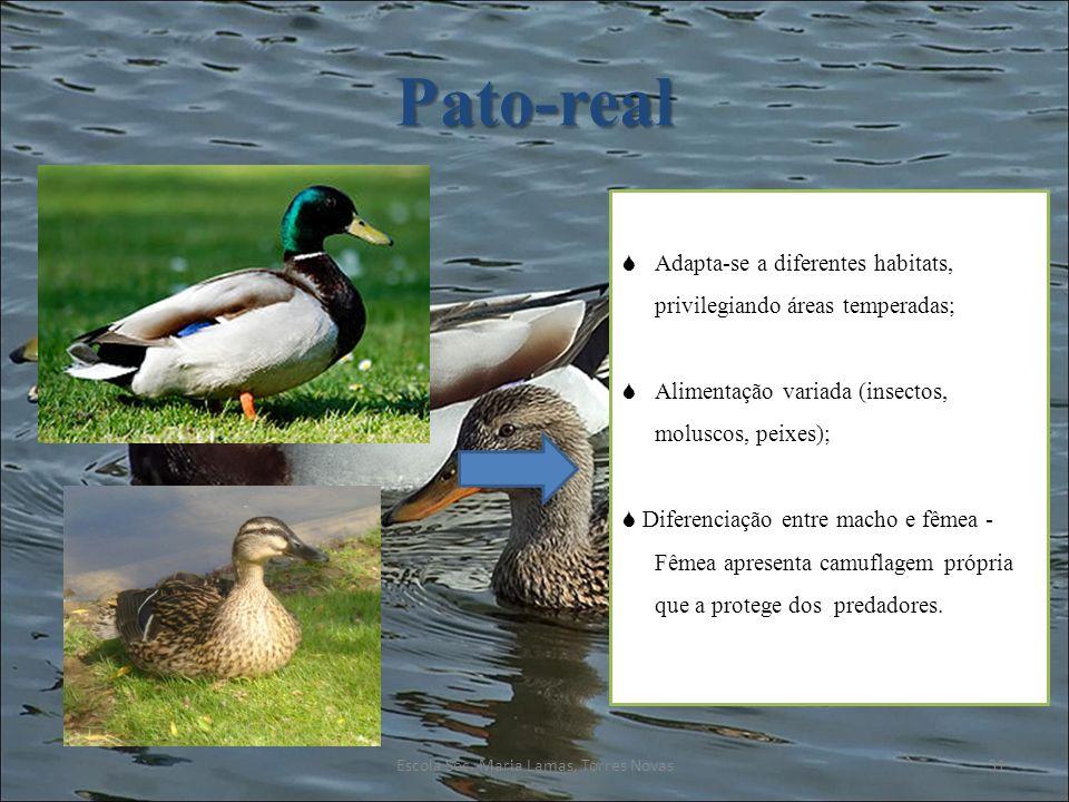 Pato-real Adapta-se a diferentes habitats, privilegiando áreas temperadas; Alimentação variada (insectos, moluscos, peixes); Diferenciação entre macho