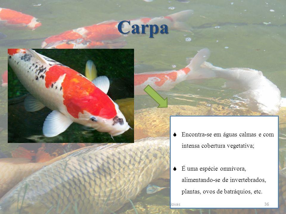 Carpa Encontra-se em águas calmas e com intensa cobertura vegetativa; É uma espécie omnívora, alimentando-se de invertebrados, plantas, ovos de batráq