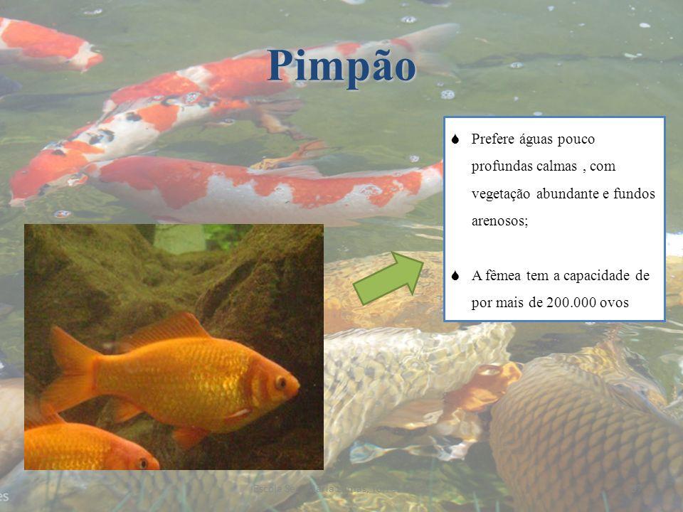 Pimpão Prefere águas pouco profundas calmas, com vegetação abundante e fundos arenosos; A fêmea tem a capacidade de por mais de 200.000 ovos 37Escola