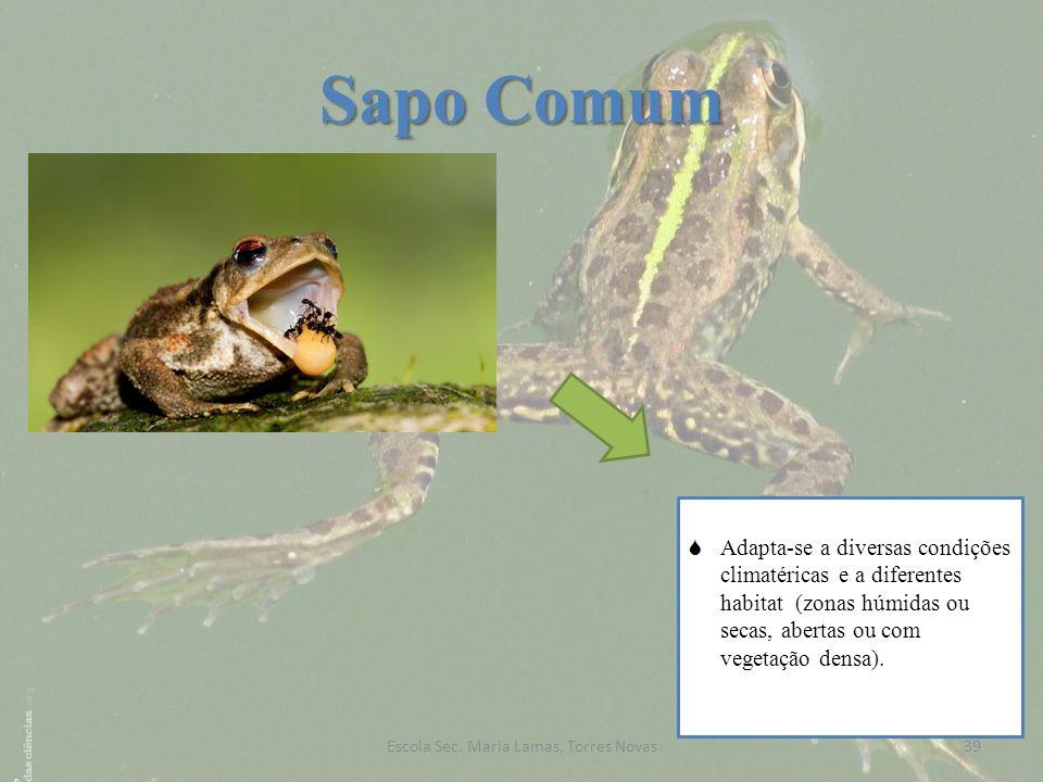 Sapo Comum Adapta-se a diversas condições climatéricas e a diferentes habitat (zonas húmidas ou secas, abertas ou com vegetação densa). 39Escola Sec.