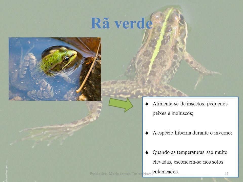 Rã verde Alimenta-se de insectos, pequenos peixes e moluscos; A espécie hiberna durante o inverno; Quando as temperaturas são muito elevadas, escondem