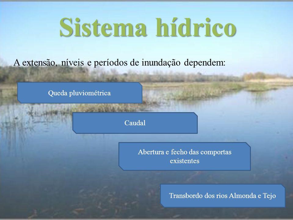 Sistema hídrico A extensão, níveis e períodos de inundação dependem: Queda pluviométrica Caudal Abertura e fecho das comportas existentes Transbordo d