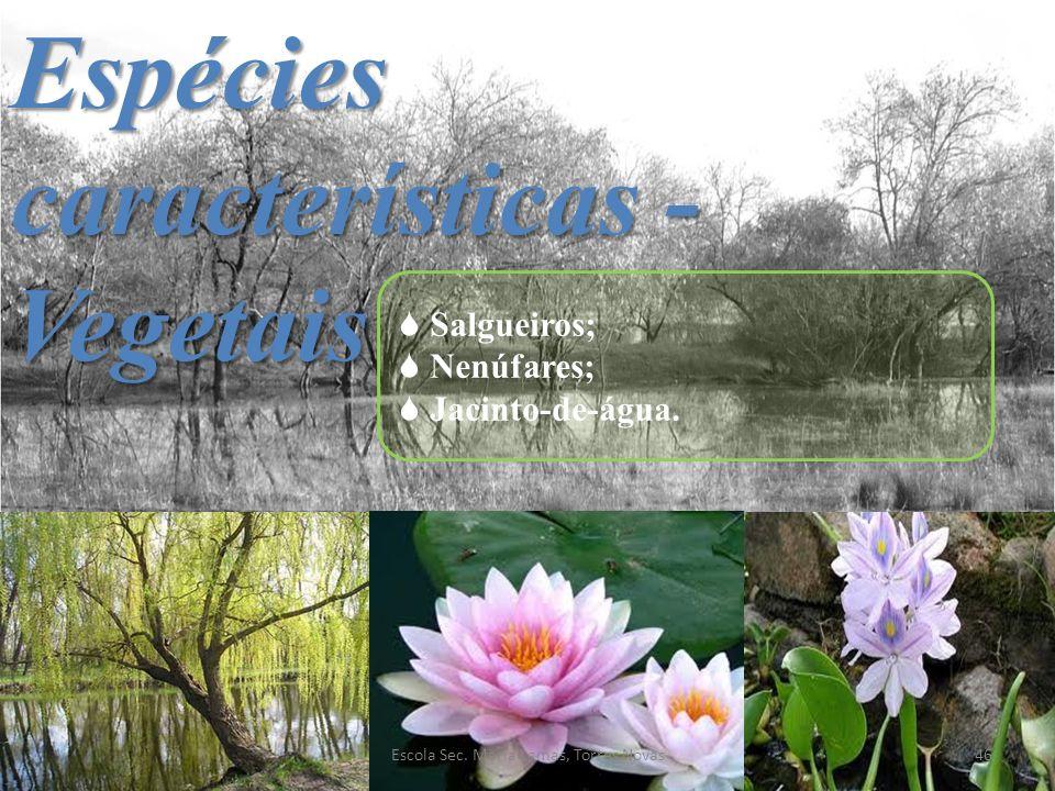 Espécies características - Vegetais Salgueiros; Nenúfares; Jacinto-de-água. 46Escola Sec. Maria Lamas, Torres Novas