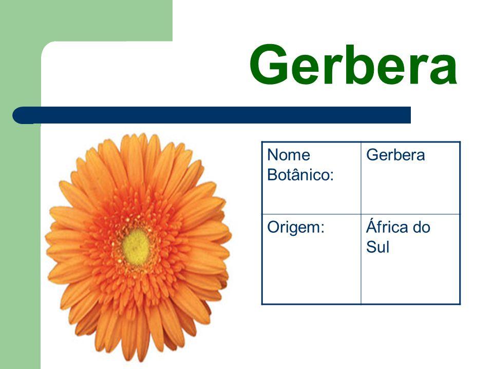 Margaridas Nome Botânico: Crysanthemum Hybrido Origem:Europa e Ásia