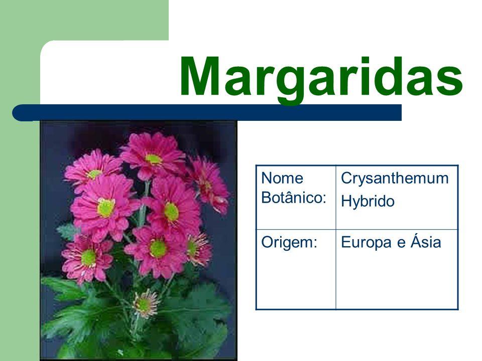 Gladíolos Nome Botânico: Gladiolus Hybrido Origem:África do Sul