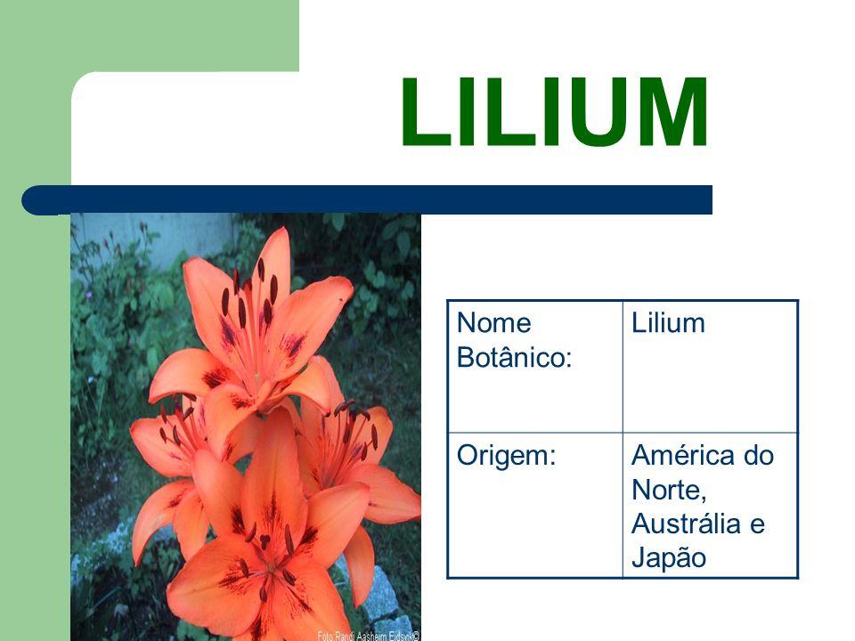 Anturios Nome Botânico: Anthurium Origem:América Tropical