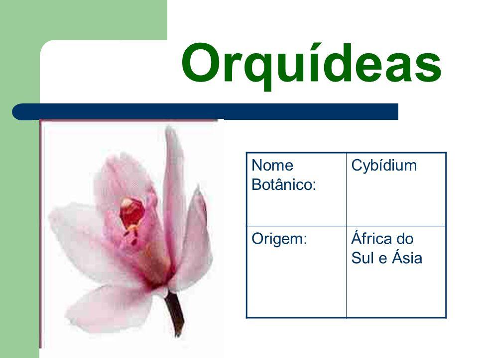 Rosas Nome Botânico: Rosa Origem:China e Europa Central