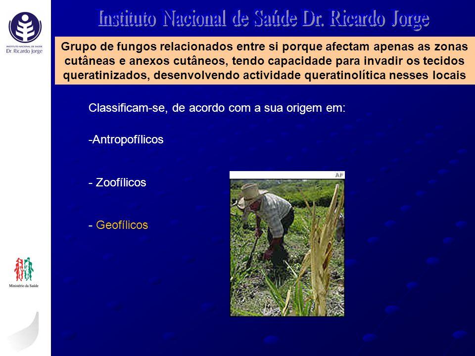 Classificam-se, de acordo com a sua origem em: -Antropofílicos - Zoofílicos - Geofílicos Grupo de fungos relacionados entre si porque afectam apenas a