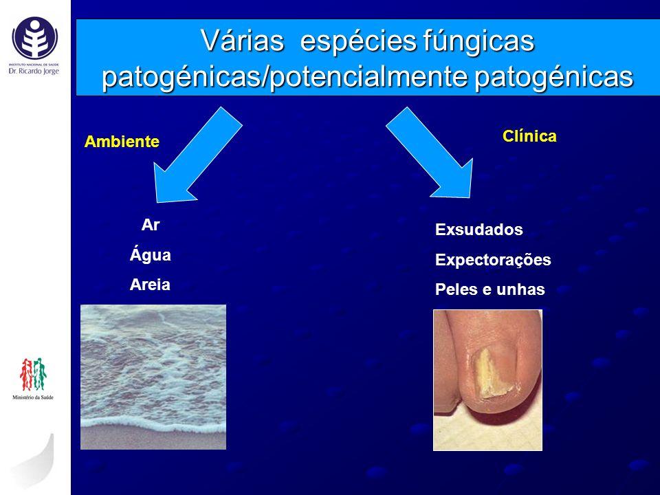 Várias espécies fúngicas patogénicas/potencialmente patogénicas Ambiente Clínica Ar Água Areia Exsudados Expectorações Peles e unhas