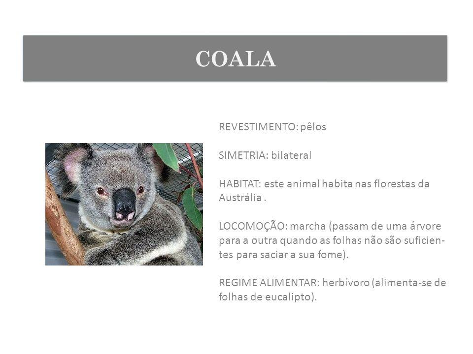 REVESTIMENTO: pêlos SIMETRIA: bilateral HABITAT: este animal habita nas florestas da Austrália. LOCOMOÇÃO: marcha (passam de uma árvore para a outra q