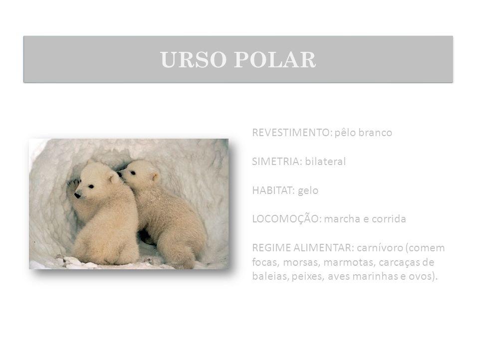 REVESTIMENTO: pêlo branco SIMETRIA: bilateral HABITAT: gelo LOCOMOÇÃO: marcha e corrida REGIME ALIMENTAR: carnívoro (comem focas, morsas, marmotas, ca