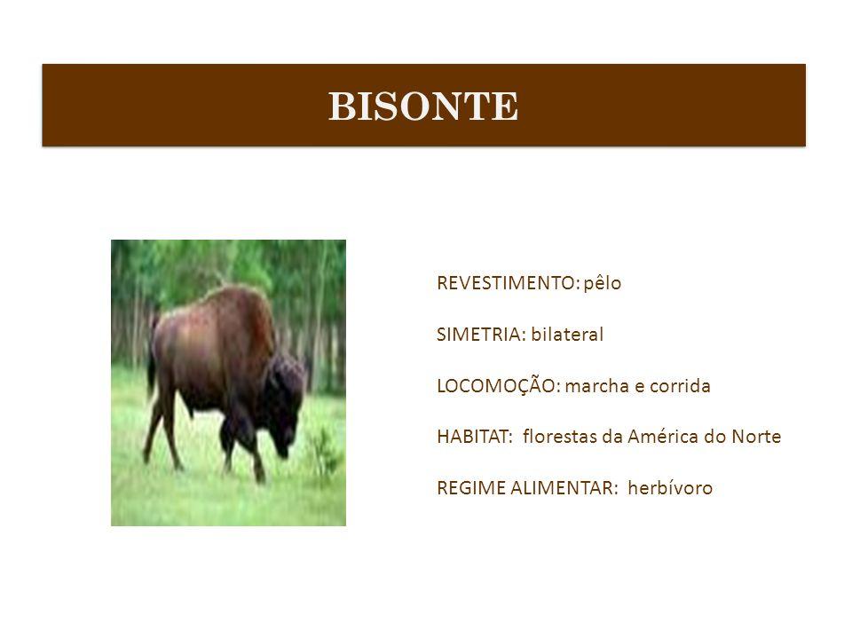 REVESTIMENTO: pêlo SIMETRIA: bilateral LOCOMOÇÃO: marcha e corrida HABITAT: florestas da América do Norte REGIME ALIMENTAR: herbívoro BISONTE