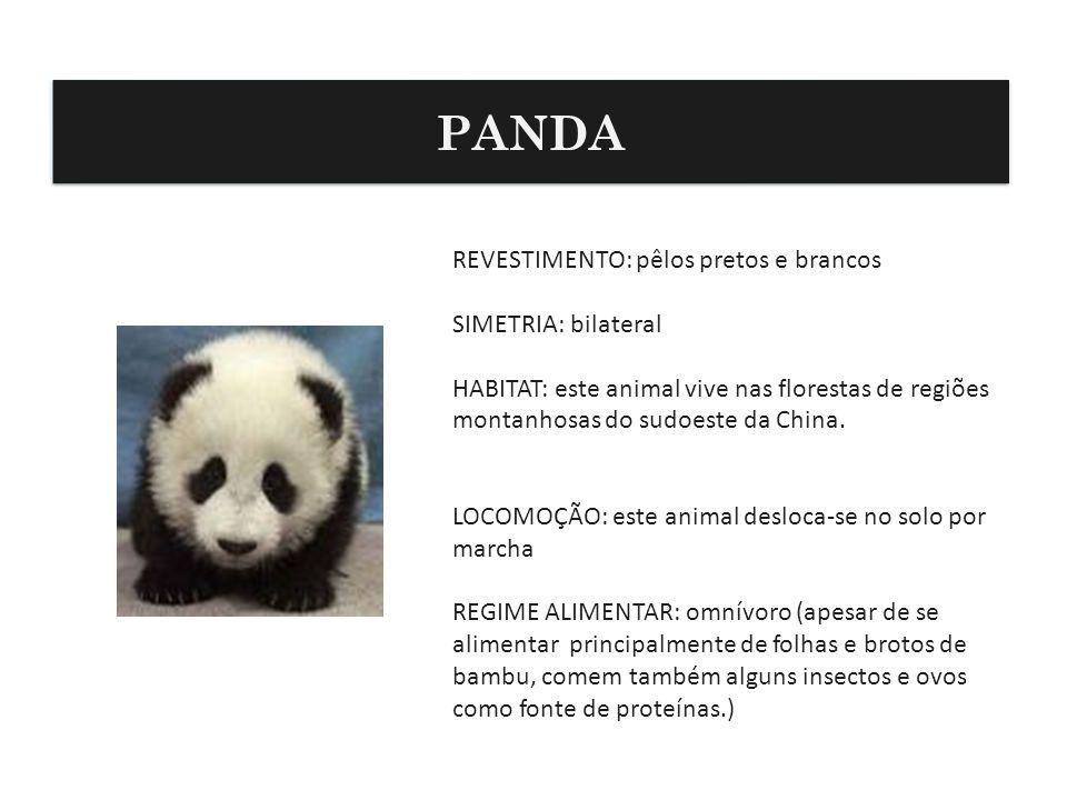 REVESTIMENTO: pêlos pretos e brancos SIMETRIA: bilateral HABITAT: este animal vive nas florestas de regiões montanhosas do sudoeste da China. LOCOMOÇÃ