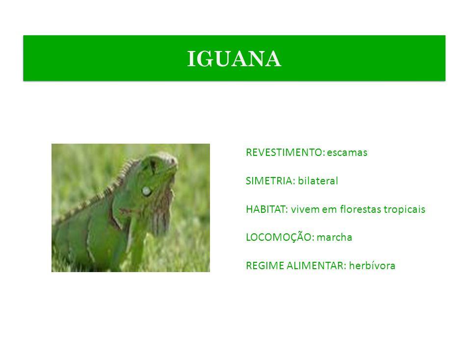 REVESTIMENTO: escamas SIMETRIA: bilateral HABITAT: vivem em florestas tropicais LOCOMOÇÃO: marcha REGIME ALIMENTAR: herbívora IGUANA
