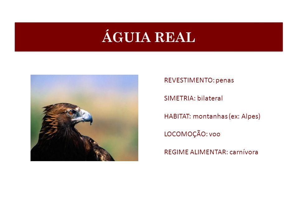 REVESTIMENTO: penas SIMETRIA: bilateral HABITAT: montanhas (ex: Alpes) LOCOMOÇÃO: voo REGIME ALIMENTAR: carnívora ÁGUIA REAL