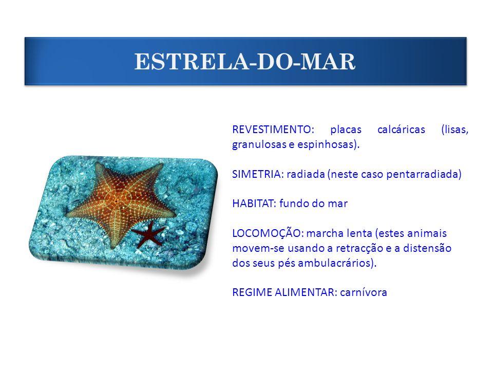 REVESTIMENTO: placas calcáricas (lisas, granulosas e espinhosas). SIMETRIA: radiada (neste caso pentarradiada) HABITAT: fundo do mar LOCOMOÇÃO: marcha