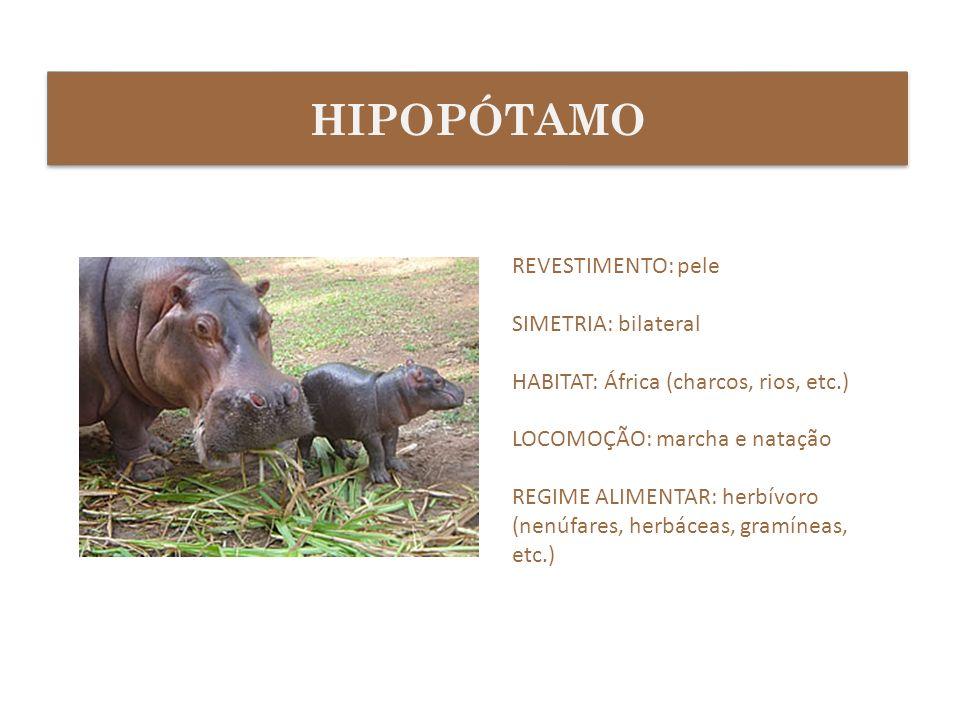 REVESTIMENTO: pele SIMETRIA: bilateral HABITAT: África (charcos, rios, etc.) LOCOMOÇÃO: marcha e natação REGIME ALIMENTAR: herbívoro (nenúfares, herbá