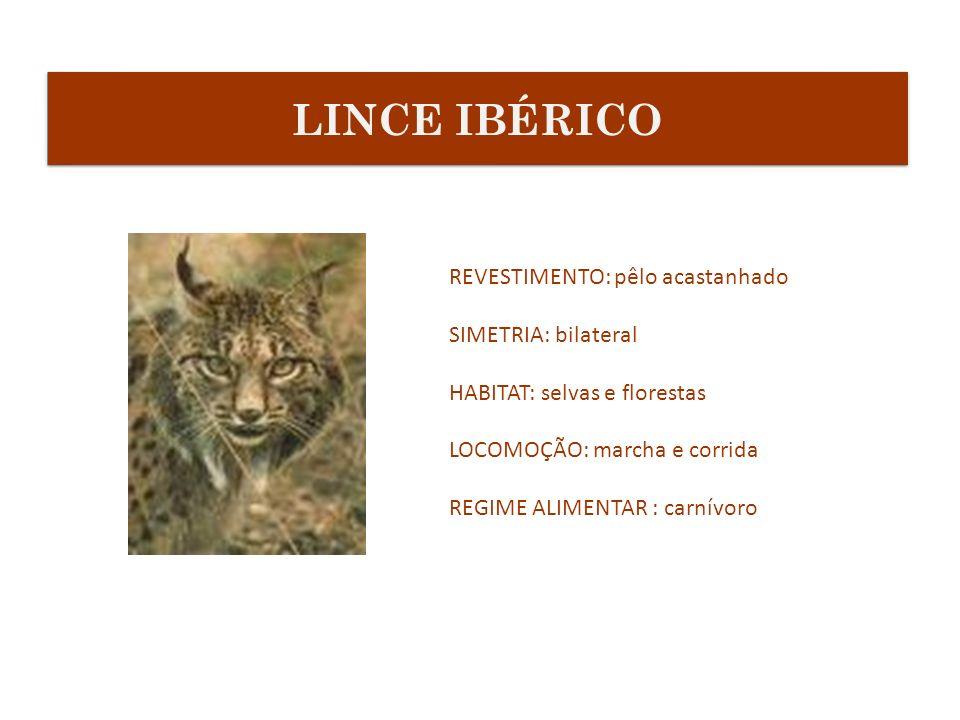 REVESTIMENTO: pêlo acastanhado SIMETRIA: bilateral HABITAT: selvas e florestas LOCOMOÇÃO: marcha e corrida REGIME ALIMENTAR : carnívoro LINCE IBÉRICO