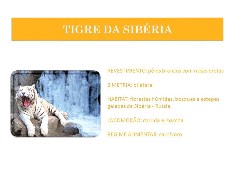 REVESTIMENTO: pêlos brancos com riscas pretas SIMETRIA: bilateral HABITAT: florestas húmidas, bosques e estepes geladas da Sibéria - Rússia. LOCOMOÇÃO
