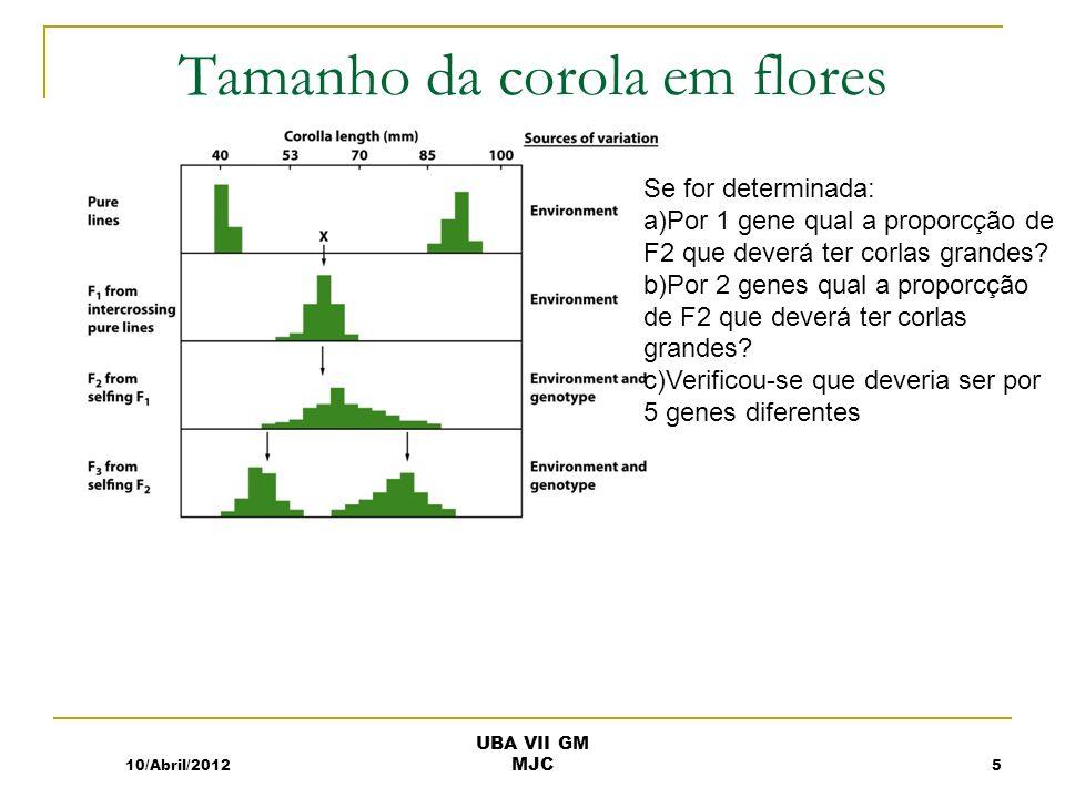 Tamanho da corola em flores 10/Abril/2012 UBA VII GM MJC 5 Se for determinada: a)Por 1 gene qual a proporcção de F2 que deverá ter corlas grandes? b)P