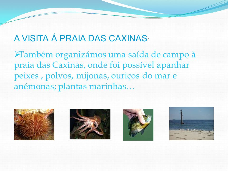 Também organizámos uma saída de campo à praia das Caxinas, onde foi possível apanhar peixes, polvos, mijonas, ouriços do mar e anémonas; plantas marin