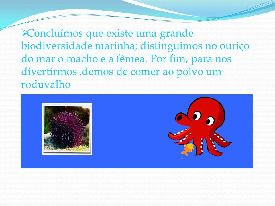 Concluímos que existe uma grande biodiversidade marinha; distinguimos no ouriço do mar o macho e a fêmea. Por fim, para nos divertirmos,demos de comer