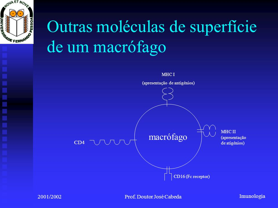 Imunologia 2001/2002Prof. Doutor José Cabeda Outras moléculas de superfície de um macrófago macrófago CD16 (Fc receptor) MHC II (apresentação de atigé