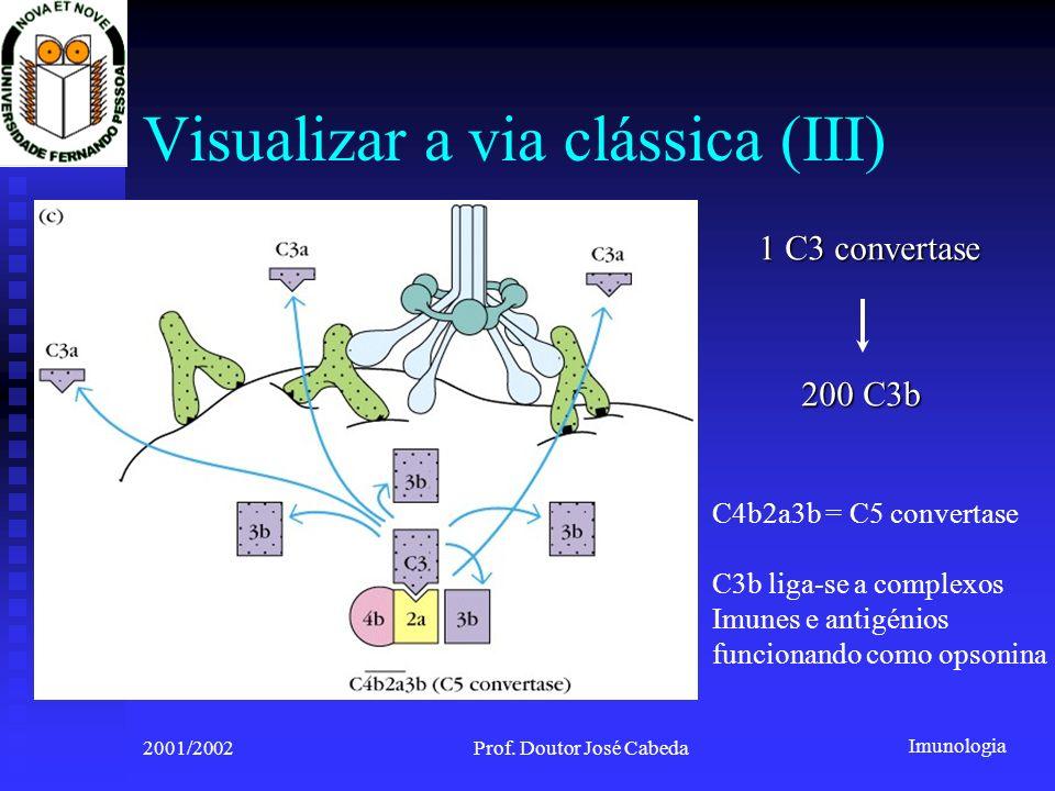 Imunologia 2001/2002Prof. Doutor José Cabeda Visualizar a via clássica (III) 1 C3 convertase 200 C3b C4b2a3b = C5 convertase C3b liga-se a complexos I