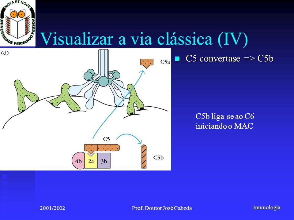 Imunologia 2001/2002Prof. Doutor José Cabeda Visualizar a via clássica (IV) C5 convertase => C5b C5 convertase => C5b C5b liga-se ao C6 iniciando o MA