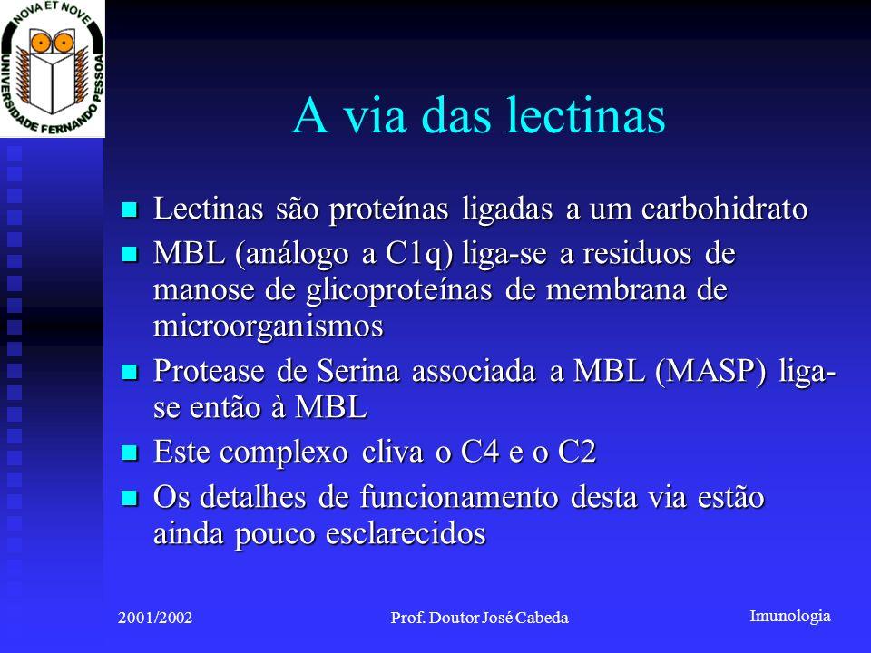 Imunologia 2001/2002Prof. Doutor José Cabeda A via das lectinas Lectinas são proteínas ligadas a um carbohidrato Lectinas são proteínas ligadas a um c