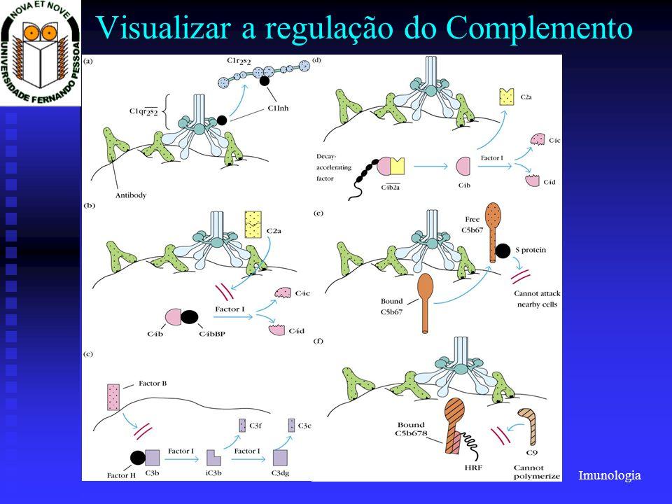 Imunologia 2001/2002Prof. Doutor José Cabeda Visualizar a regulação do Complemento