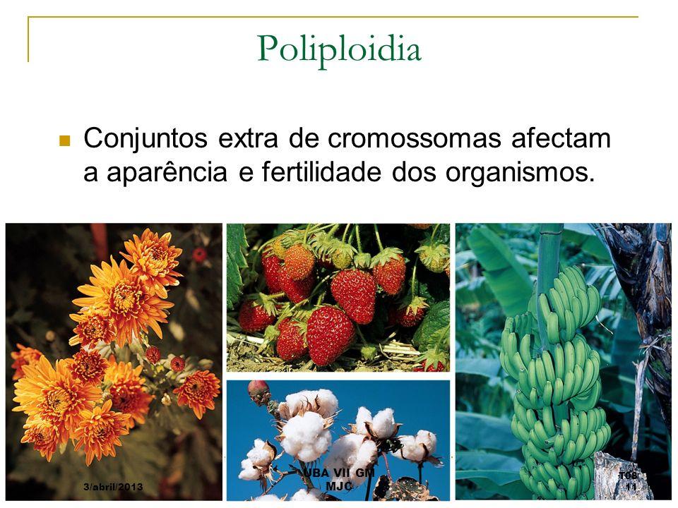 Poliploidia Conjuntos extra de cromossomas afectam a aparência e fertilidade dos organismos. 3/abril/2013 T08 11 UBA VII GM MJC
