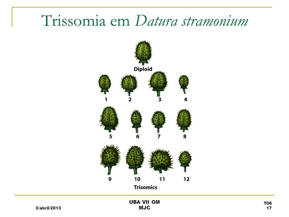 Trissomia em Datura stramonium 3/abril/2013 T08 17 UBA VII GM MJC