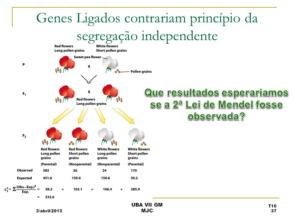 Genes Ligados contrariam princípio da segregação independente 3/abril/2013 T10 37 UBA VII GM MJC