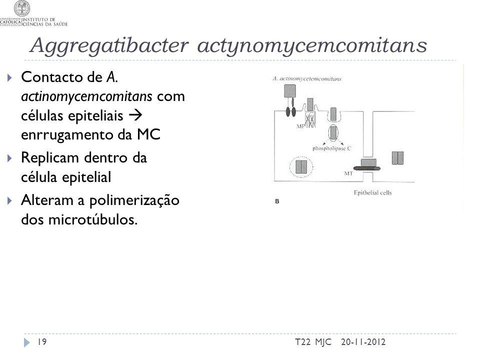 Aggregatibacter actynomycemcomitans 20-11-2012T22 MJC19 Contacto de A. actinomycemcomitans com células epiteliais enrrugamento da MC Replicam dentro d
