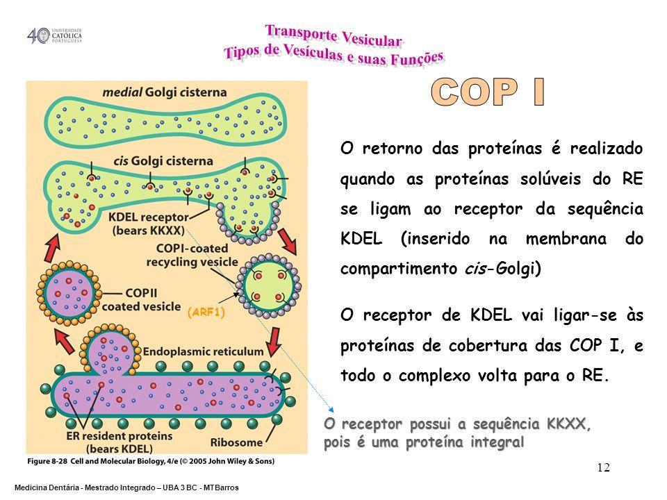 DEPARTAMENTO DE CIÊNCIAS DA SAÚDE Medicina Dentária - Mestrado Integrado – UBA 3 BC - MTBarros 12 O retorno das proteínas é realizado quando as proteí