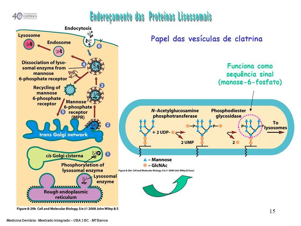 DEPARTAMENTO DE CIÊNCIAS DA SAÚDE Medicina Dentária - Mestrado Integrado – UBA 3 BC - MTBarros 15 Papel das vesículas de clatrina Funciona como sequên